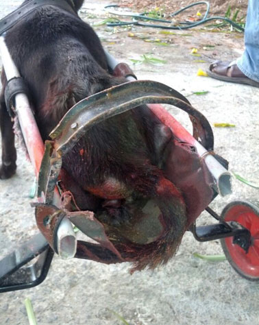 Can You Get Help From The Government For Dog Spaying